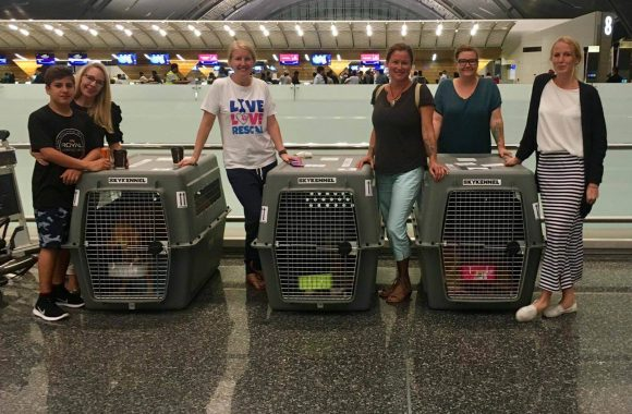 Paws Rescue Qatar - Flight Angels