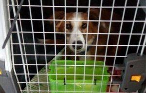 Paws Rescue Qatar - animal shelter Doha, animal rescue Doha