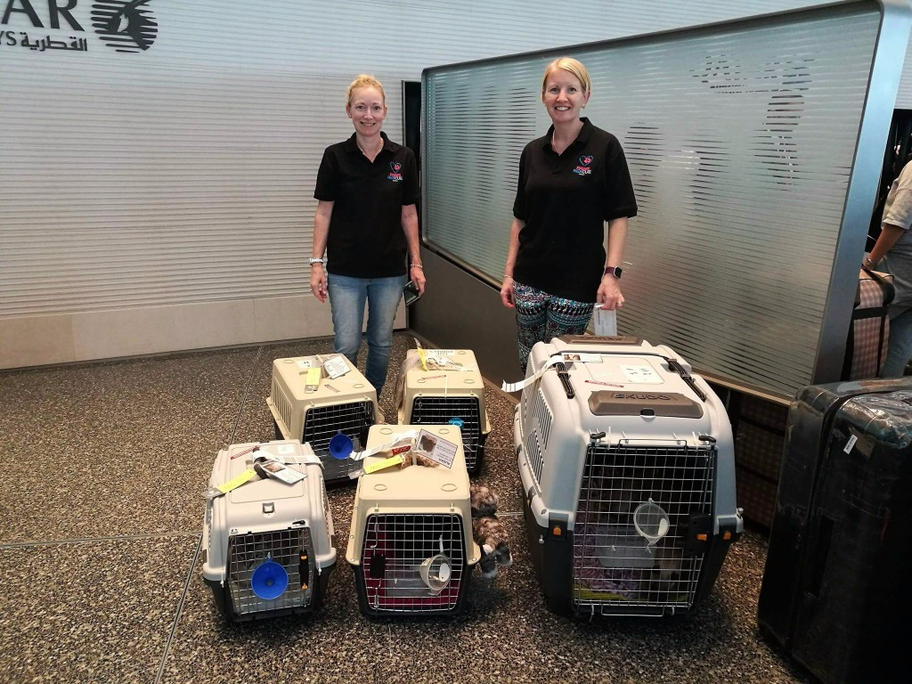 Paws Rescue Qatar - Paws Flight stories